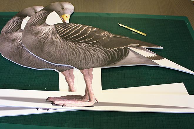 foamboard goose graphics